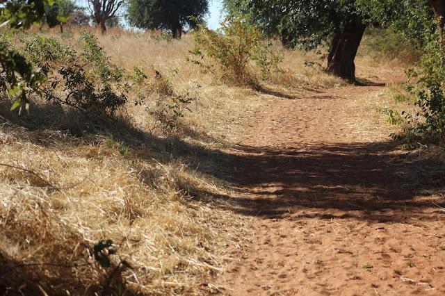 caminos de África