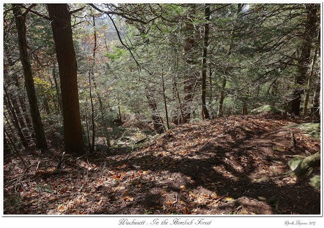 Wachusett: In the Hemlock Forest