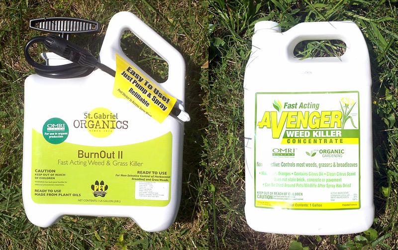 Organic Lawn Renovation: BurnOut II VS Nature's Avenger