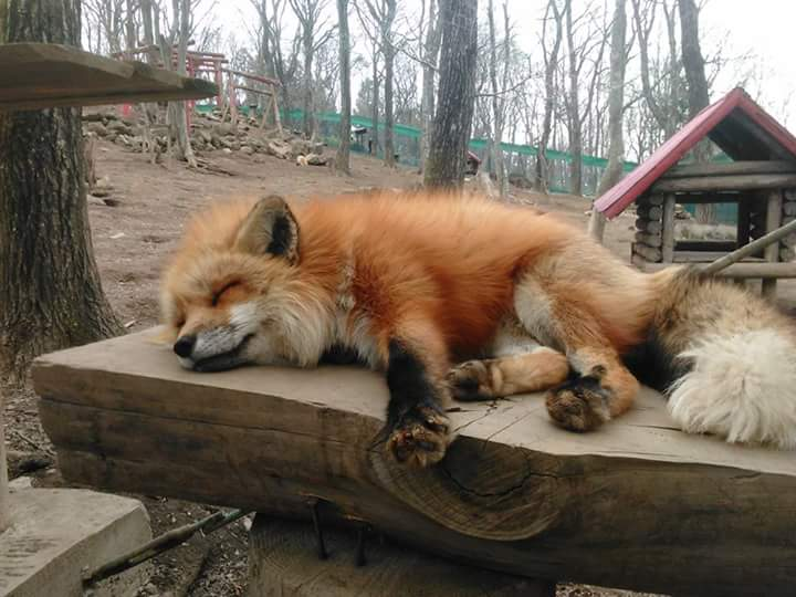 Funny animals of the week - 20 May 2016, cute animal photos, best animal photos, funny animal images