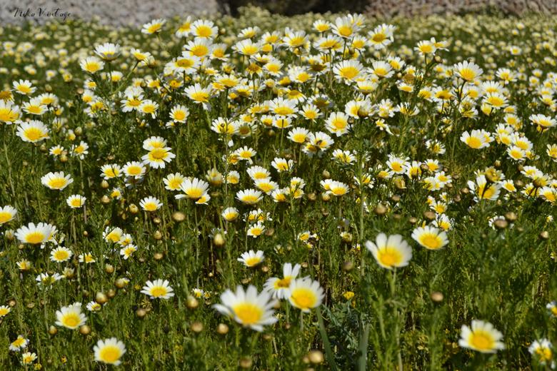 Vamos a darle la bienvenida a la primavera mostrando unas cuantas ideas para recibirla y comenzarla de la mejor manera posible