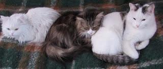 3 кота