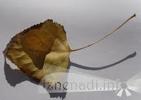 есенна романтична изненада