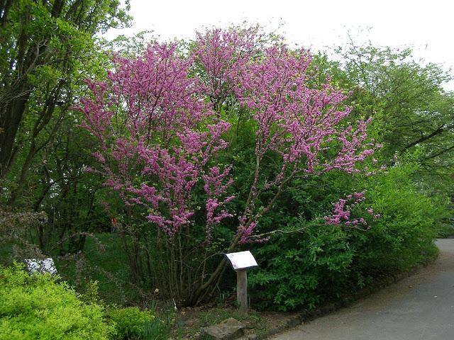 Kornik Arboretum (Polonia)