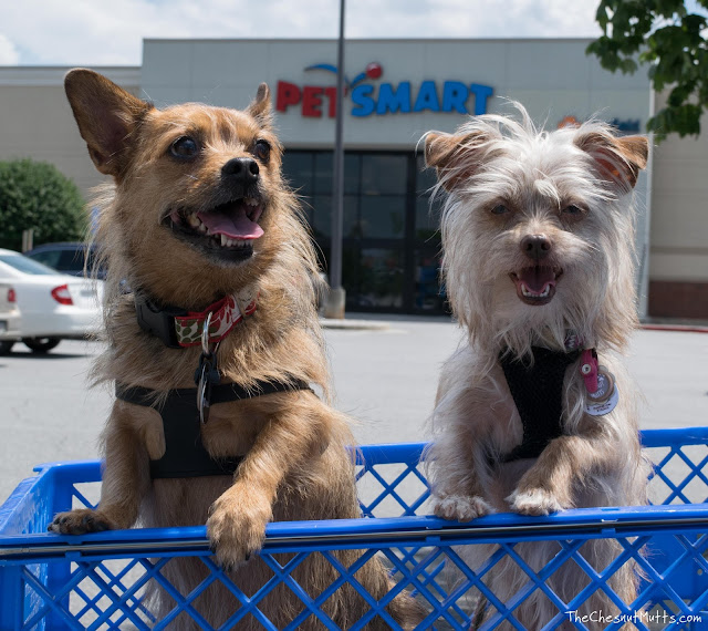Jada and Bailey outside of PetSmart