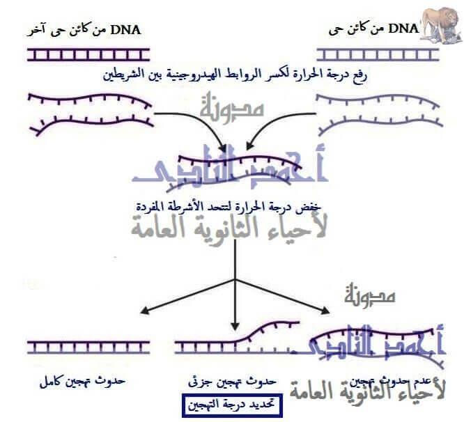 تهجين الحمض النووى - الهندسة الوراثية - نقل جينات - تقنيات التكنولوجيا الجزيئية ( الهندسة الوراثية ) - تقنية تهجين الحمض النووى - تحديد العلاقات التطورية - الثالث الثانوى - أحياء الثانوية العامة