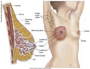 Gejala Dini Kanker Payudara Yang Seringkali Disepelekan Oleh Wanita