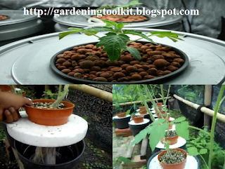 """how to grow tomatoes"",""how to grow hydroponics tomatoes"",""growing hydroponic tomatoes from seed"""