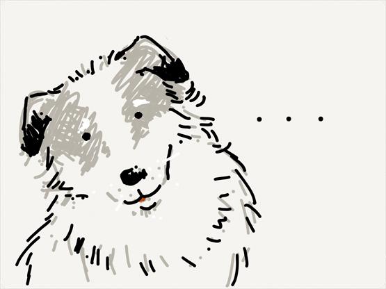 funny dog waiting