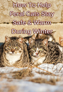 How To Help Feral Cats Stay Safe & Warm During Winter