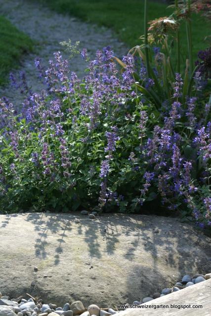 Immergrüne Winterharte Blühende Stauden Wohn Design Welche Blühenden Blumen Sind Winterhart Bl C3 Bchend