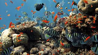 Coral reef fish 12