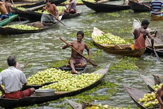 Goiaba Silvestre em Bangladesh