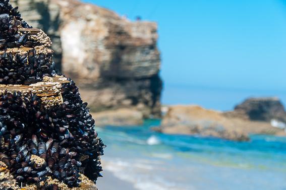 Mejillones en la playa de las catedrales en Ribadeo