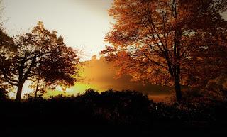 Sunrise lights up a golden fog behind backlit autumn trees.