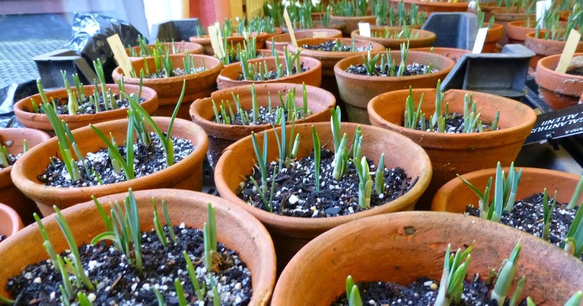 botaniquarium blog vorbereitung zur schneegl ckchen ausstellung. Black Bedroom Furniture Sets. Home Design Ideas
