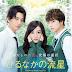 Sinopsis Film Jepang Romantis Terbaru : Daytime Shooting Star (2017)