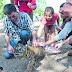 Babulai, el bebé tigre que será la atracción del zoo