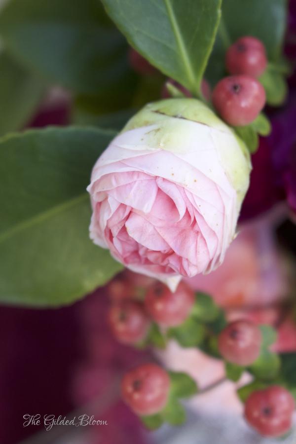 Pink Camellia Bud- www.gildedbloom.com