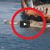 VIDEO: Giant Sea Monster Na Natagpuan sa Persian Gulf Shocks The Internet
