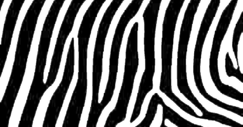 Zebra Print The Animal Life