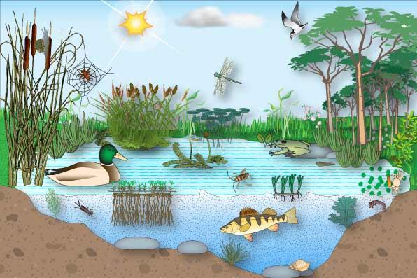 Los Ecosistemas Los Ecosistemas