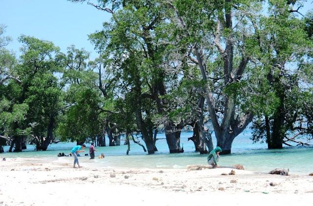 Pasir putih yang dilindungi bakau