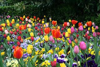 les flors d'en Josep Cassany