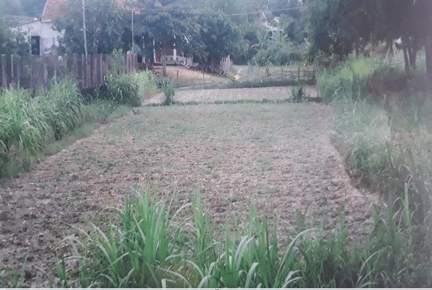 những sai phạm của đơn vị thi công là sử dụng đất không đạt chuẩn