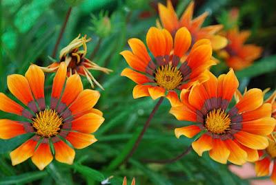 Flores bonitas para decoración: