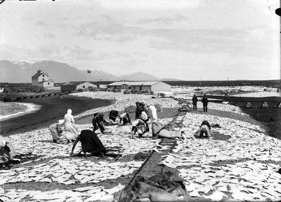 Old Photos of Iceland in The Early 20th Century  vintage