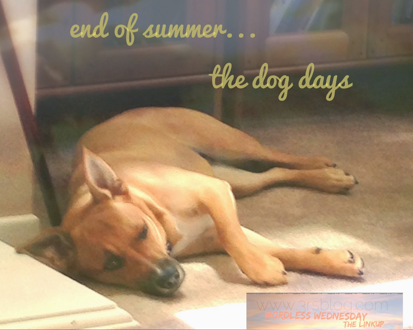 Dog dozing in the sun on a Wordless Wednesday at The 3Rs Blog