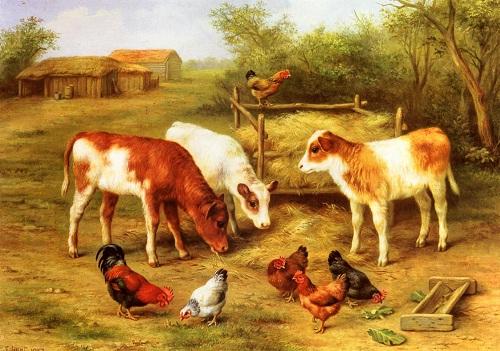 danalar ve tavuklar