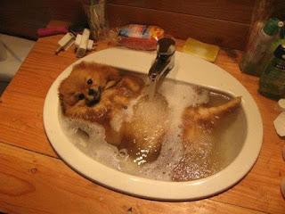 Aumente a freqüência dos banhos – O animal pode e deve tomar mais banhos do que o habitual nesses dias mais quentes.  Quem tem condições, pode colocar uma piscininha ou bacia no quintal para os cachorros aliviarem o calor.