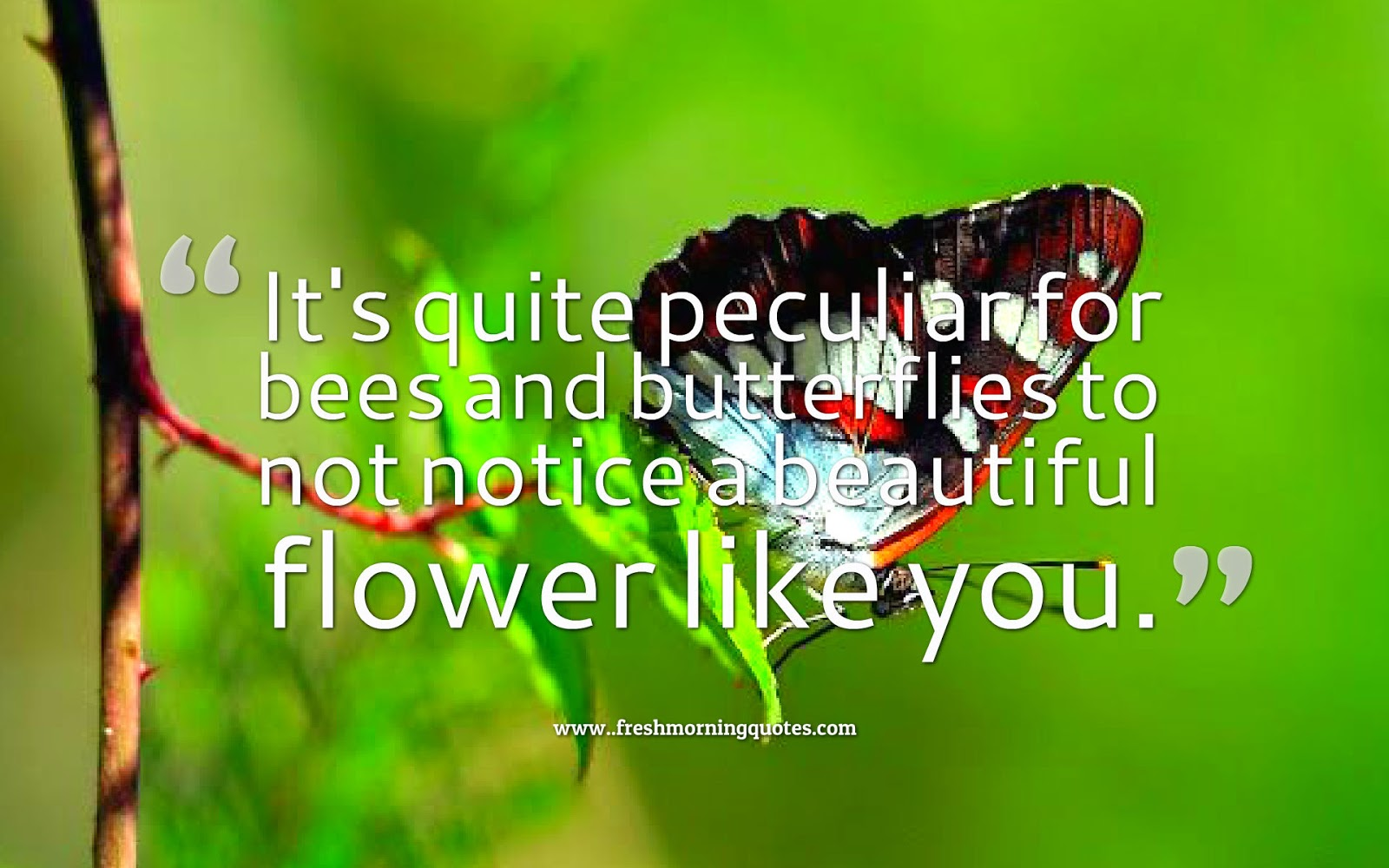 You Are So Beautiful Quotes For Her Freshmorningquotes