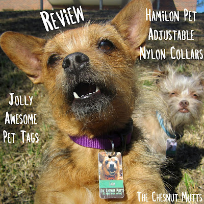 The Chesnut Mutts Review: Hamilton Pet Adjustable Nylon Collars and Jolly Awesome Pet Tags