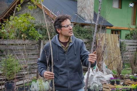 Jardines y Huertas Hoy: Promoción de compra anticipada de plantas frutales