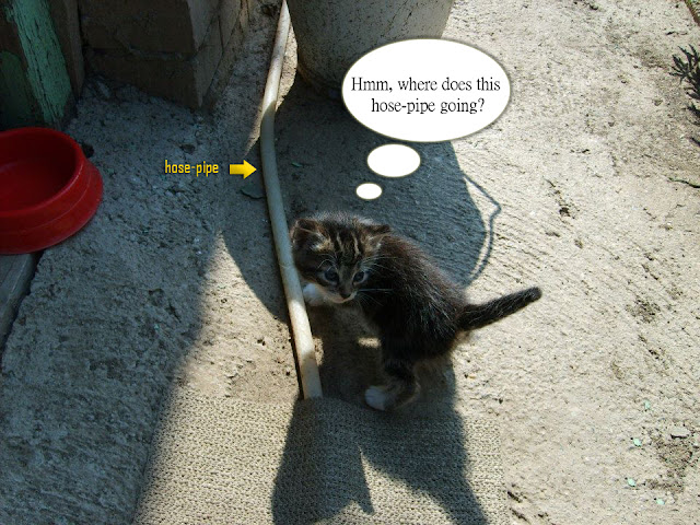 A cat wondering about hose-pipe