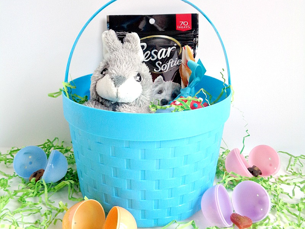 5 Tips For Creating Easter Baskets For Pets