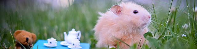 hamster giá rẻ hcm