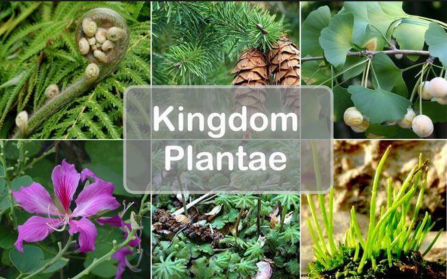 Education Blog For Everyone: Kingdom Plantae (Plants): Definition ...