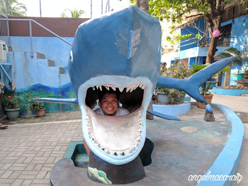 SHARKKKK (haha, hello PJ)