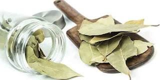 Tanaman Herbal Untuk Penyakit Asam Urat