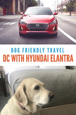 #drivehyundai #dogfriendlytravel #canopybyhilton