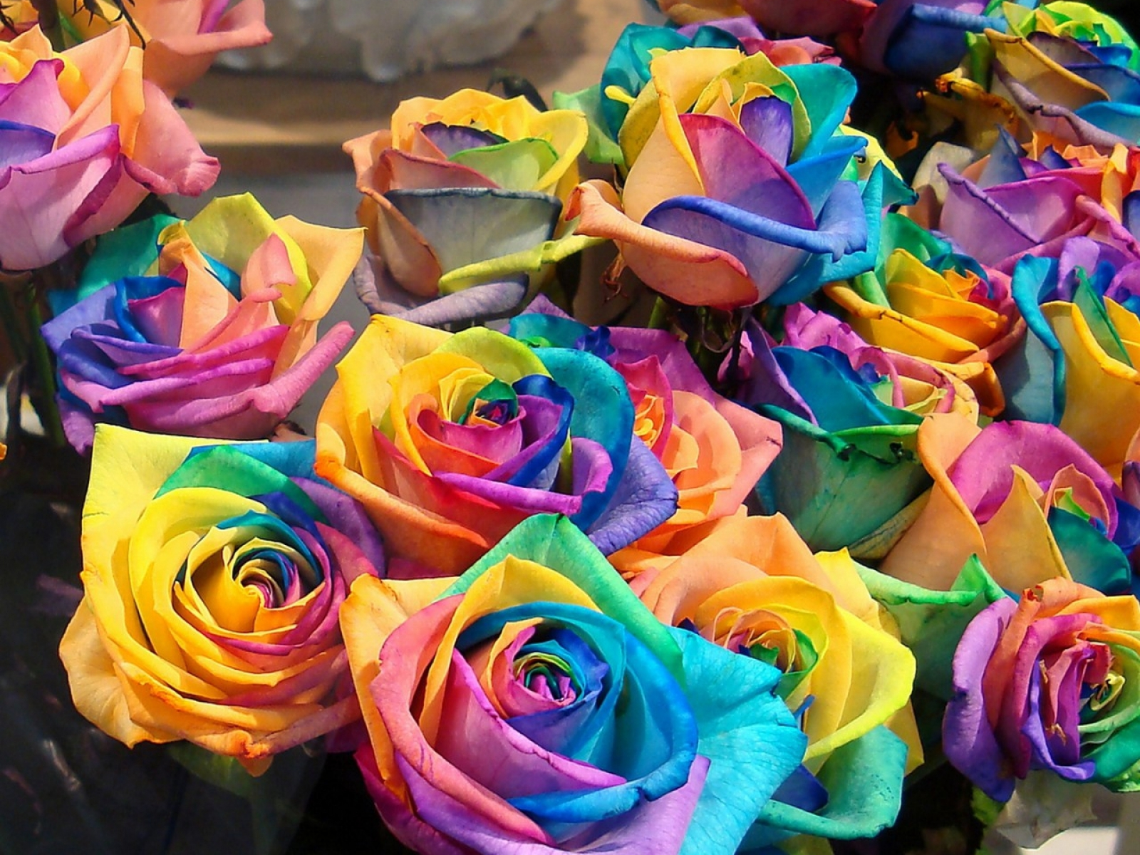 JUST HD WALLPAPERS: Colourful Rose Flower Wallpapers