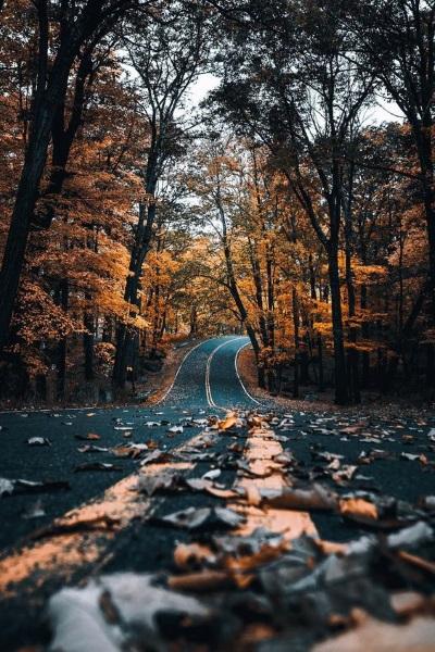 paysage d'automne, nature, forêt