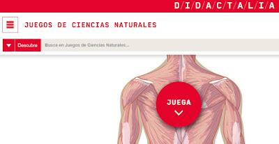 https://cienciasnaturales.didactalia.net/recurso/musculos-del-cuerpo-vista-de-espaldas-primaria/fc87d3e6-5200-4cca-b1be-71219de9d901