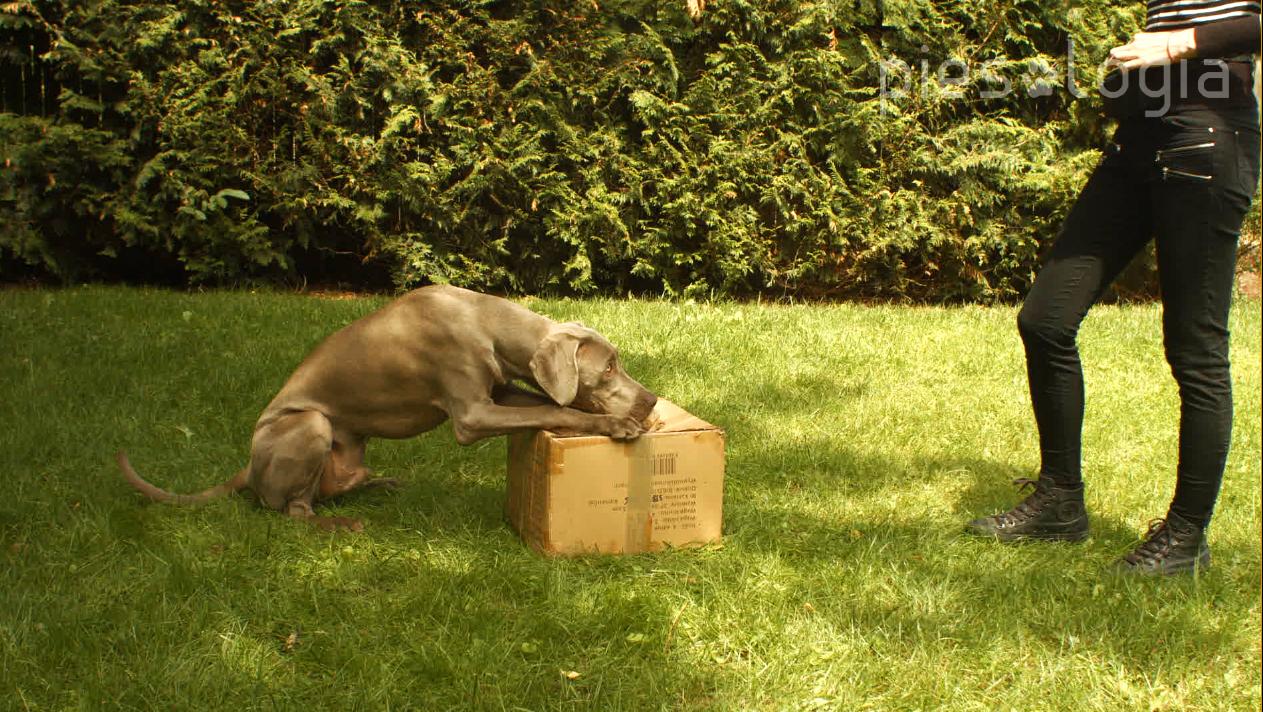 szkolenie psa