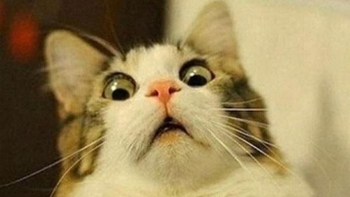 Gatto Terrorizzato Alla Vista Di Un Cetriolo Video