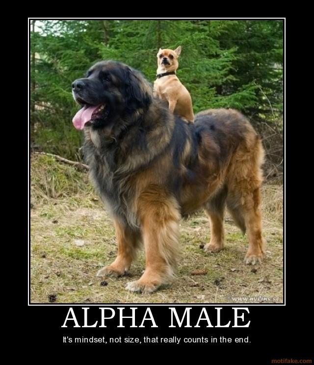 alpha male internet dating